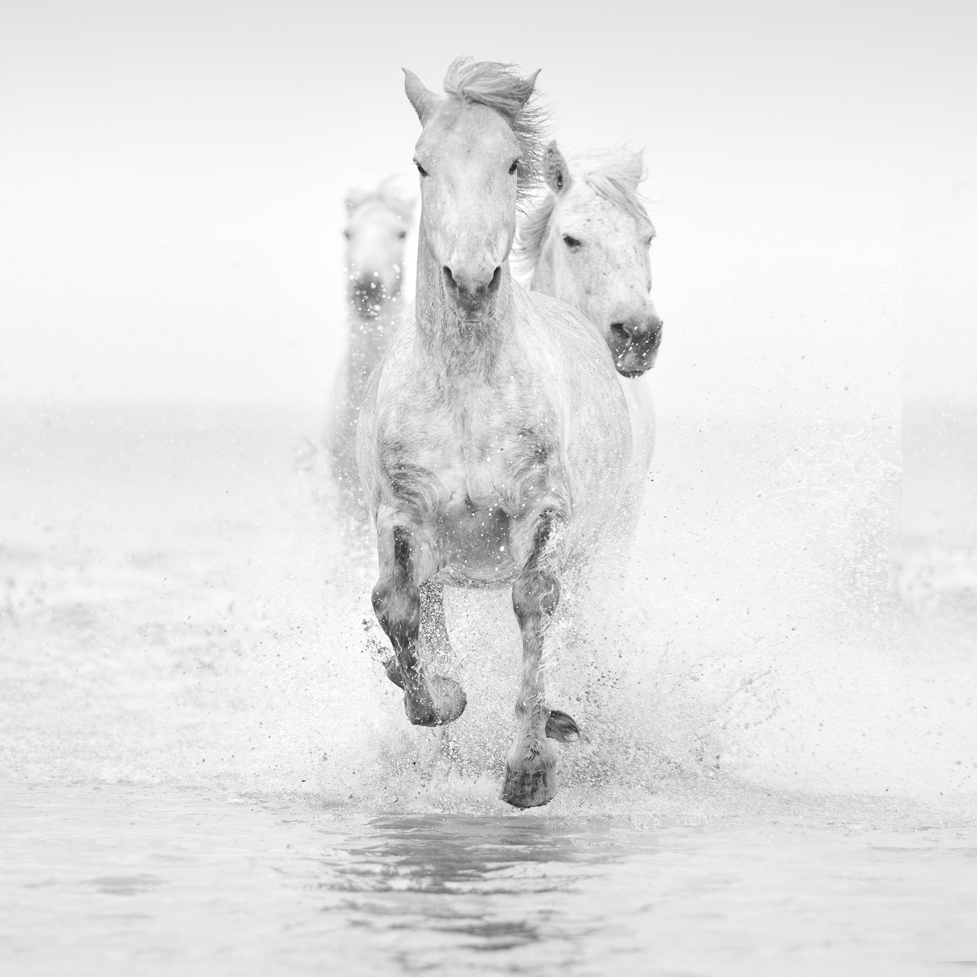 White Horses Of The Camargue Photography Tour Ocean Capture