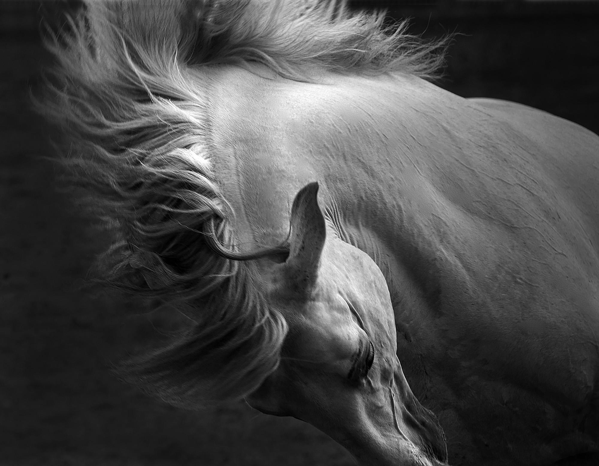 Equidae Equine Photography Workshop With Tony Stromberg Ocean Capture