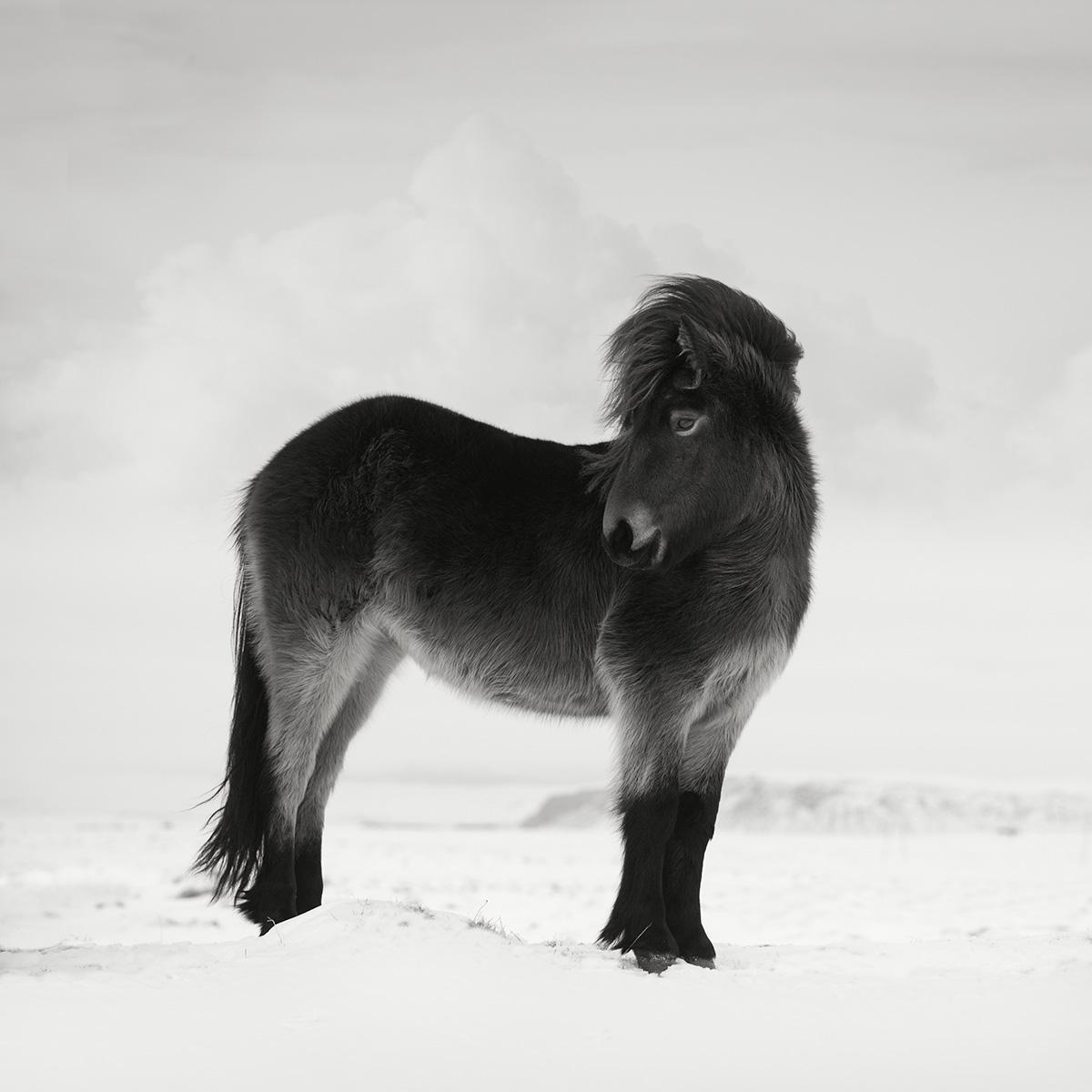Icelandic Winter Horses Photography Tour Ocean Capture